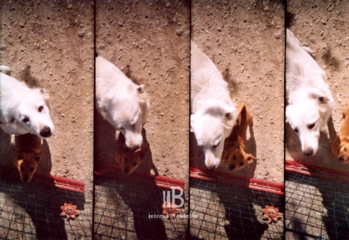 supersampler-1